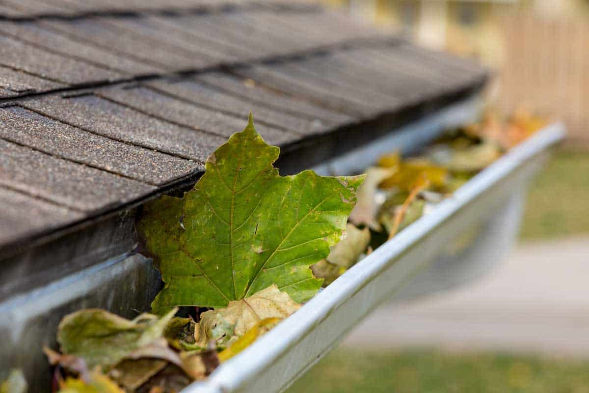 Closeup of house rain gutter clogged with colorful leaves falling from trees in fall, How Do You Clean Gutters From The Ground? [6 Effective Methods]