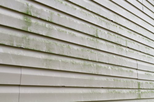 Read more about the article How To Remove Green Algae From Vinyl Siding