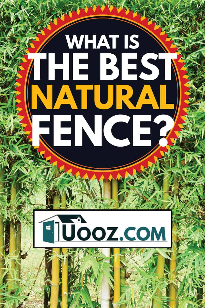 bamboo forest, what is the best natural fence