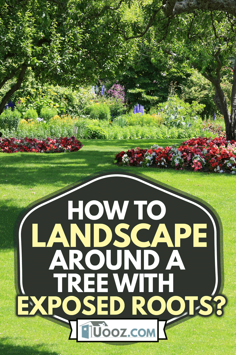 Beautiful summer garden with flower beds filled with begonias, How To Landscape Around A Tree With Exposed Roots