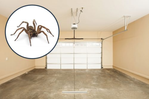 Read more about the article How To Keep Spiders Out Of The Garage [A Complete Guide]