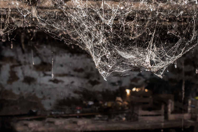 Cobweb spider web in old basement