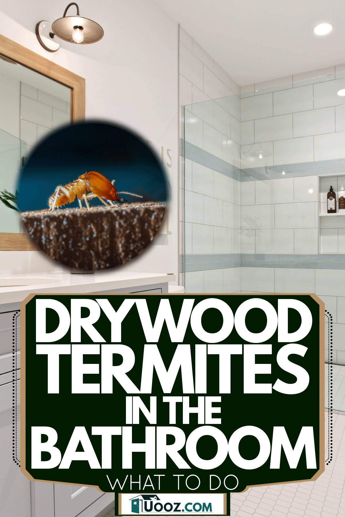 Interior of a modern contemporary bathroom with a glass walled shower and a white painted bathroom cabinetry, Drywood Termites In The Bathroom - What To do?