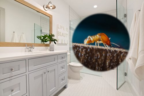 Read more about the article Drywood Termites In The Bathroom – What To do?