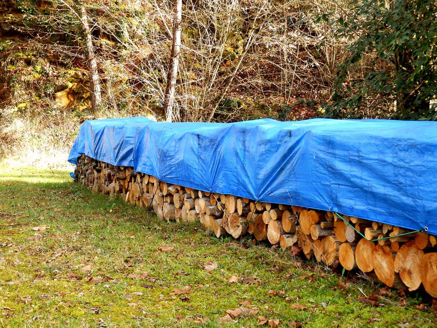 Log pile in the woods covered with blue tarp