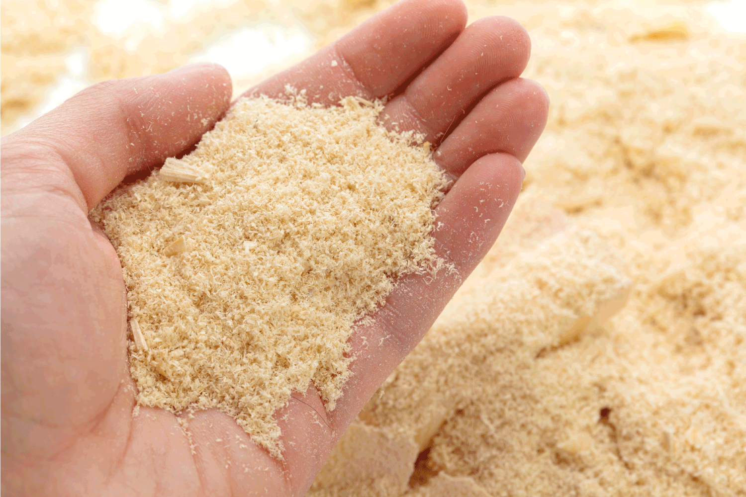 Wood shavings in hand, close-up view