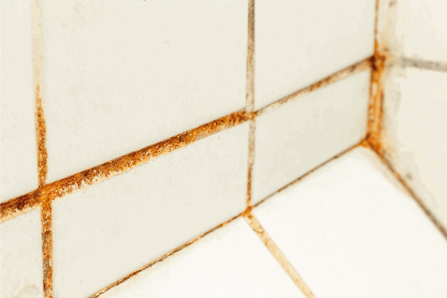 Mold fungus and rust growing in tile joints in damp poorly ventilated bathroom with high humidity