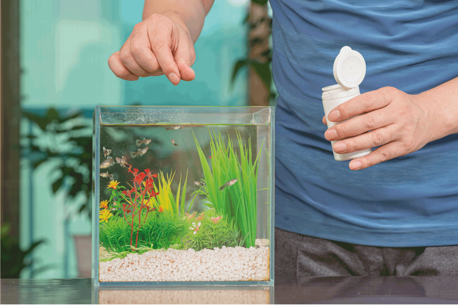 A middle-aged Asian man who feeds the guppy he raises in a small tank