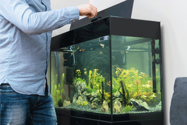 Man feeding fishes in the aquarium
