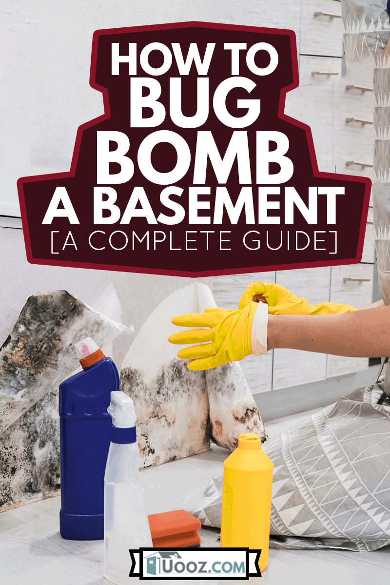 Housekeepers Hand With Glove Cleaning Mold From Wall With Sponge And Spray Bottle cleaning the basement, How To Bug Bomb A Basement [A Complete Guide]