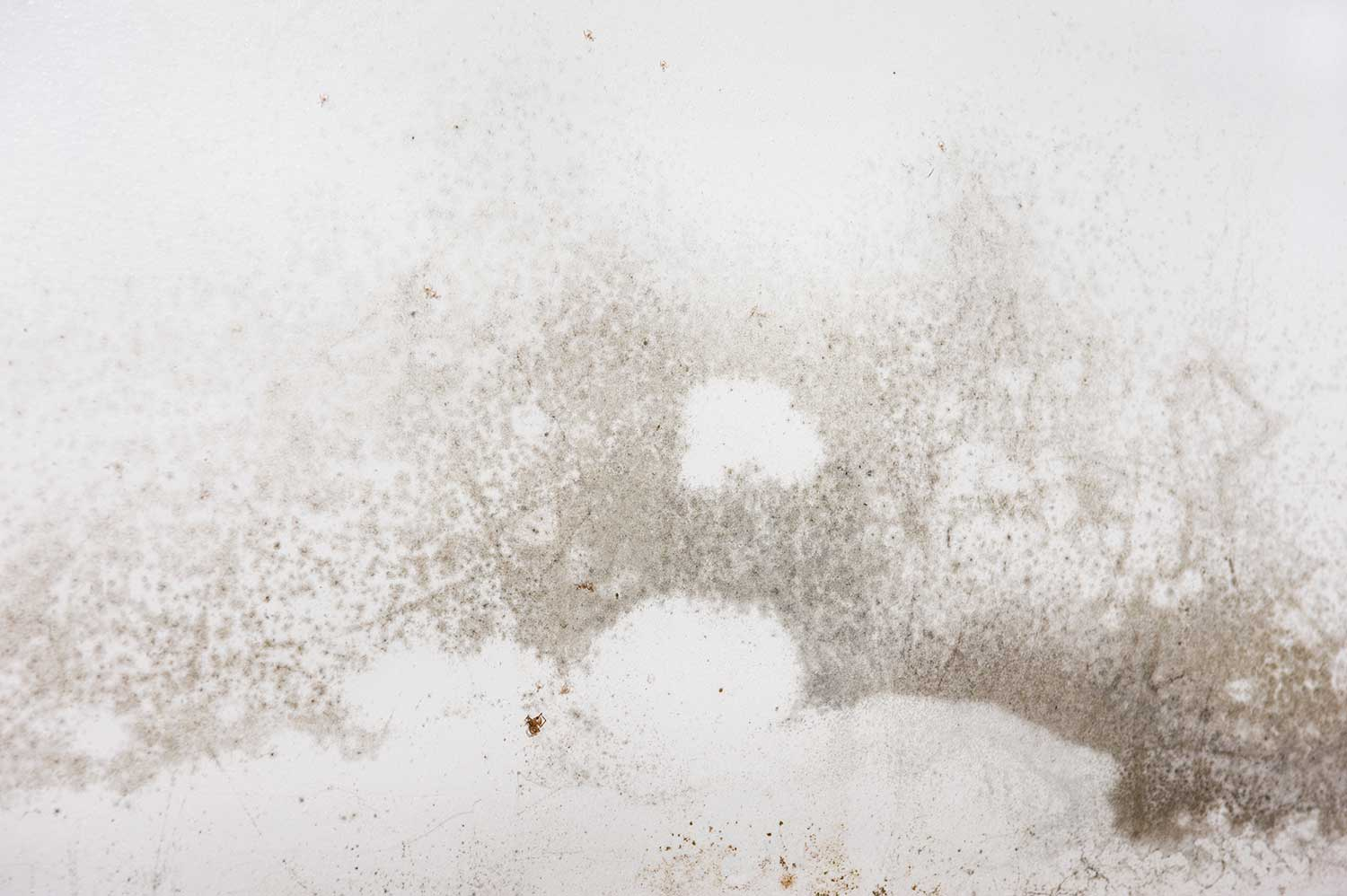 Mold on the walls and baseboard trim in the basement of a home from water leaking